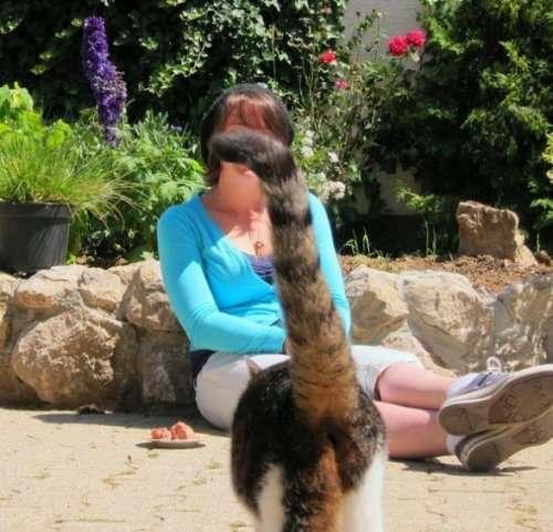 Смешные кошки, идеально испортившие фотографии (10 фото)