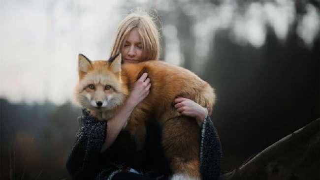Как лисица подружилась с фотографом (29 фото)