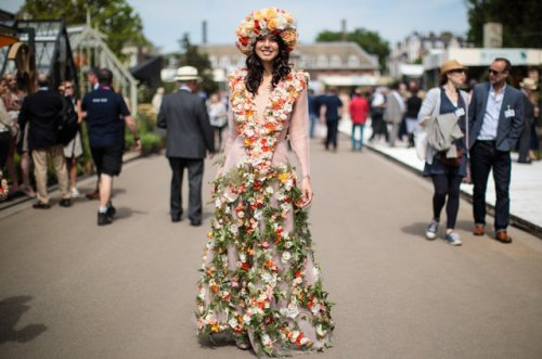 Цветочная выставка Chelsea Flower Show 2017 в Лондоне (18 фото)