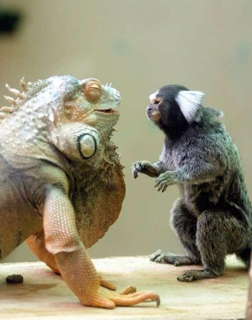 Необычная и очаровательная дружба между животными разных видов (34 фото)