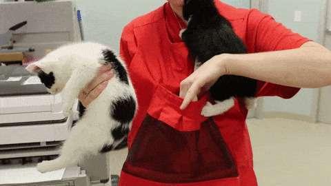 Это супер-изобретение позволяет приручить дикого котенка всего за 48 часов (5 фото + 2 гиф)