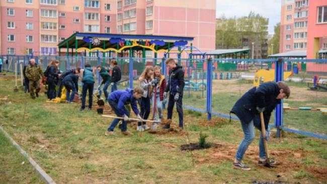 В Иваново украли саженцы -Аллеи славы-, высаженные к 9 мая (5 фото)