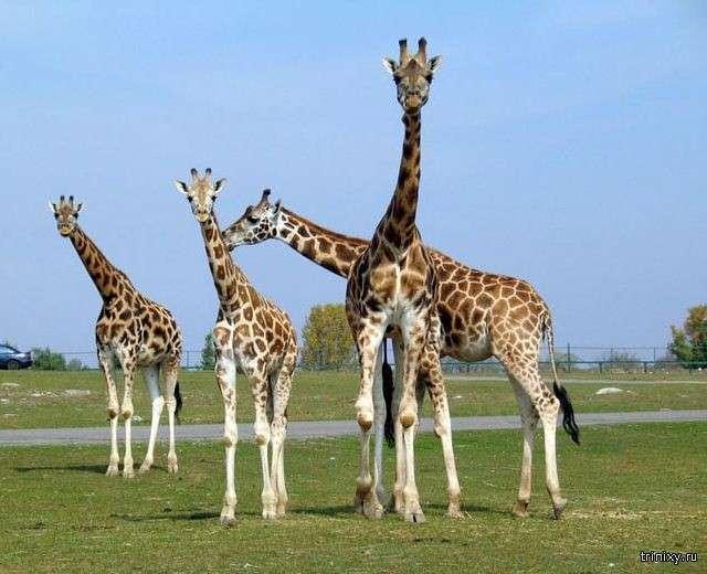 Самые редкие в мире виды животных (10 фото)