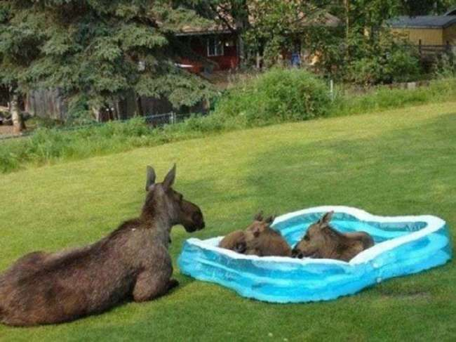 Животные, ищут спасения от жары (22 фото)