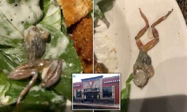 Жительнице Калифорнии в ресторане подали дохлую лягушку (6 фото)