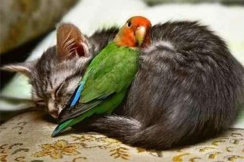 Дружные животные, которые подарят вам улыбку (28 фото)