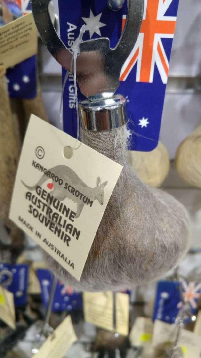 Слабонервным не смотреть: 20 раз, когда австралийские животные зашли слишком далеко (20 фото)
