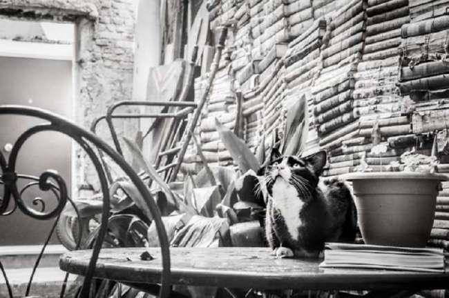 Прекрасные коты Венеции (12 фото)