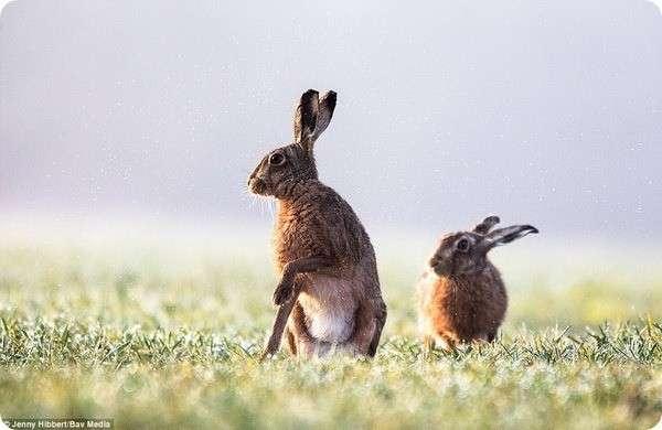 Лучшие работы -Фотограф дикой природы 2017- (14 фото)