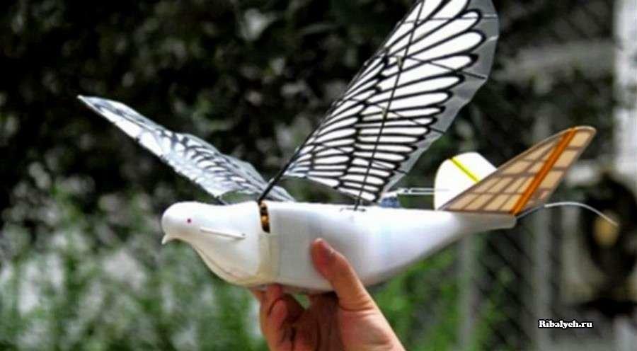 Китай: дроны, похожие на птиц. Для слежки за жителями?