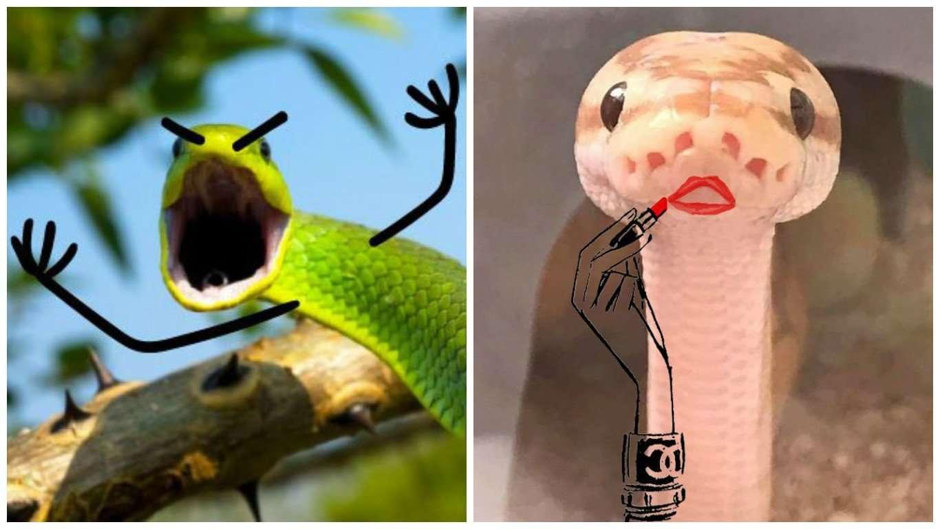 Открытки рождение, приколы с змеями картинки