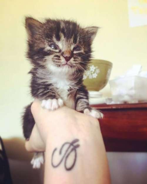 Слепая кошка доказывает, что она ничем не хуже зрячих питомцев (11 фото + видео)