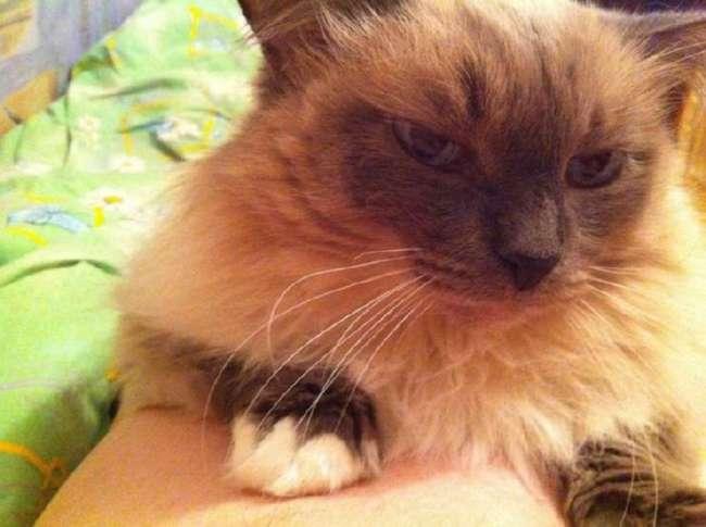 В Тюмени живет самый старый кот России: по человеческим меркам ему 113 лет