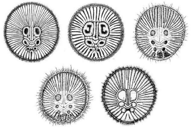 Циклокосмия: загадочный паук с большой печатью на попе
