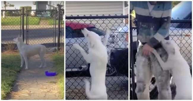 Слепой и глухой щенок по запаху встречает своего хозяина с работы