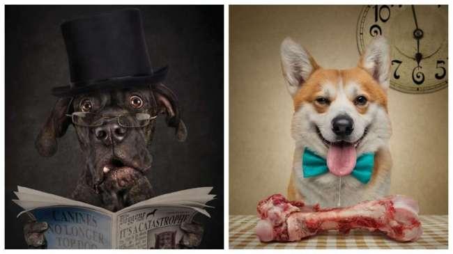Фотопортреты собак и кошек, на которых они чертовски похожи на людей