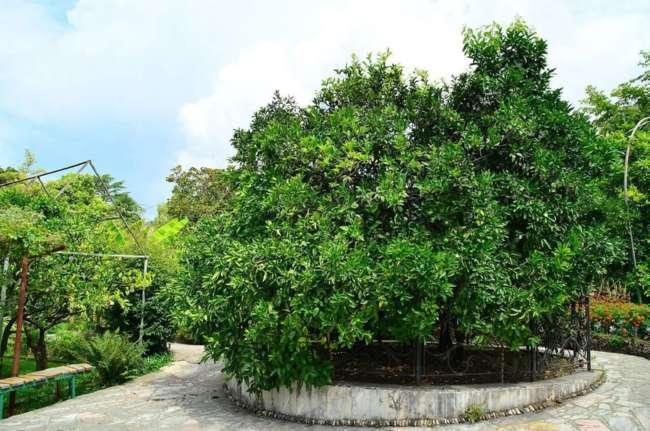 Деревья Франкенштейна