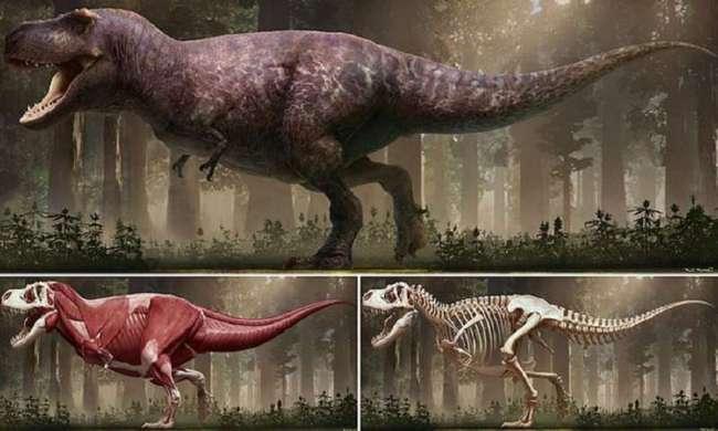 Ученые выяснили, как на самом деле выглядел тираннозавр