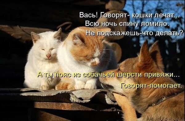 Братья наши меньшие (18 фото)