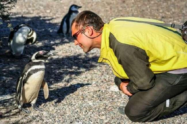 Переворачиватели пингвинов и другие странные профессии современной России (8 фото)