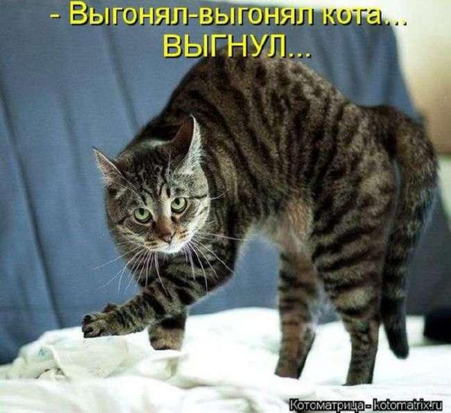 Животные шутят (23 фото)
