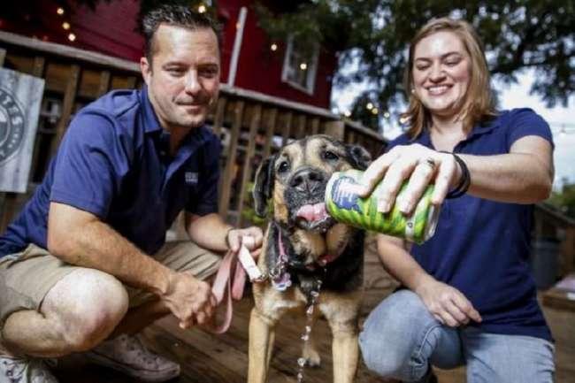 Супруги открыли пивоварню, чтобы варить пенное для собак (4 фото)