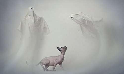 Кэтрин Холмс каждый год фотографирует животных на Хэллоуин, и снимки получаются очень атмосферными (22 фото)