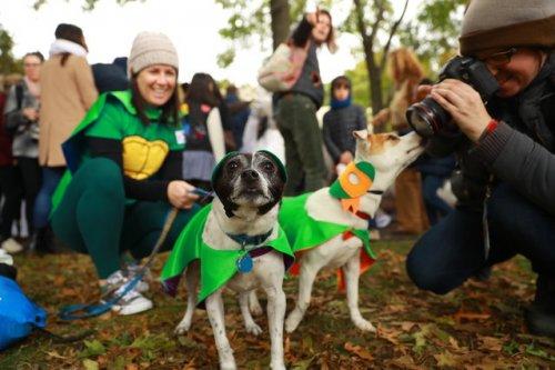 В Нью-Йорке прошёл крупнейший в мире костюмированный парад собак, и его участники достойны вашего внимания! (11 фото)