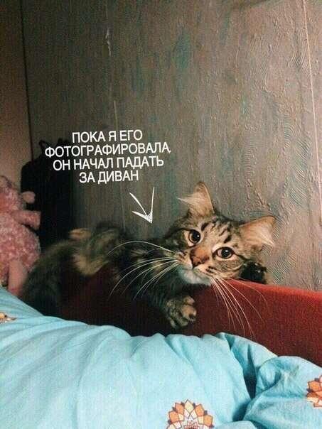 Трогательные приключения котейки, который пришёл ластиться к хозяйке, но что-то пошло не так (4 фото)