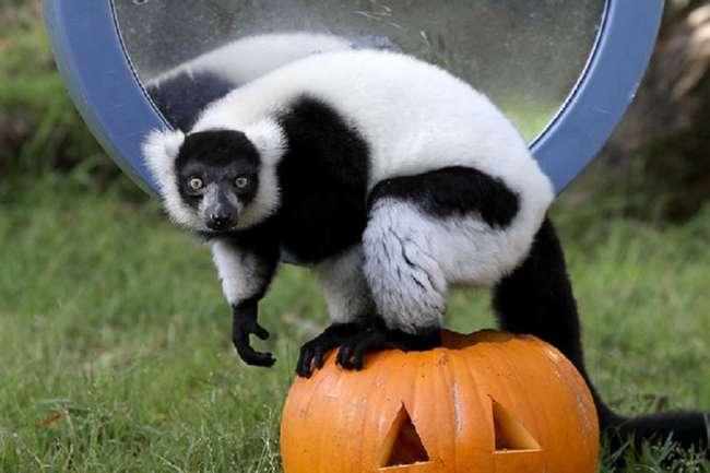Подарки на Хэллоуин в зоопарке Сан-Франциско