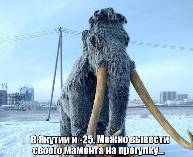 Подборка прикольных фото №1991 (47 фото)