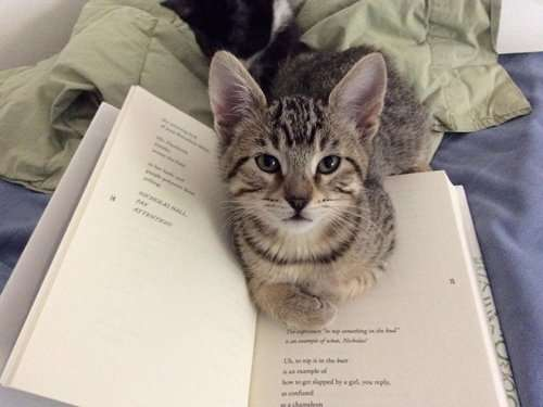 Котюни против чтения, и в своём выражении желаний они очень убедительны! (21 фото)