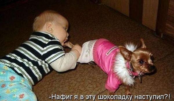 Животные шутят (18 фото)