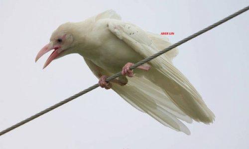 Животные-альбиносы, которые выглядят необычно (18 фото)