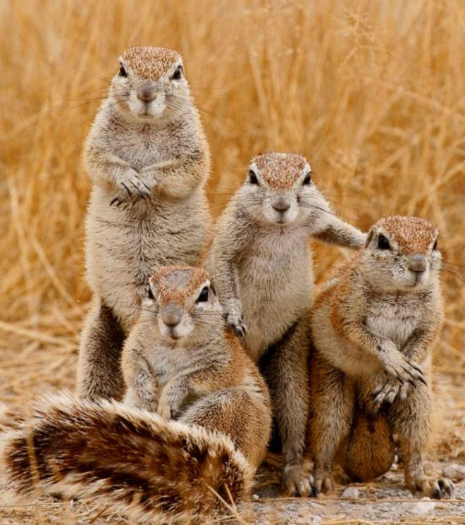 Крутые фото животных, которые хоть сейчас на обложку альбома (20 фото)