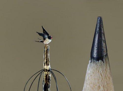 Художница вырезает крошечных реалистичных птиц, которые меньше кончика карандаша (20 фото)