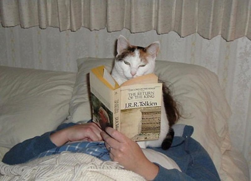 С этими котейками точно не заскучаешь!
