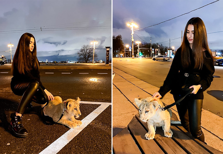 Дочь бизнесмена устроила фотосессию со львенком и машиной ДПС
