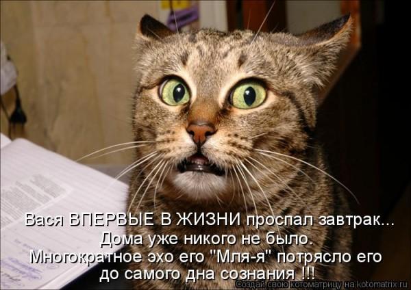 Шутки животных (15 фото)