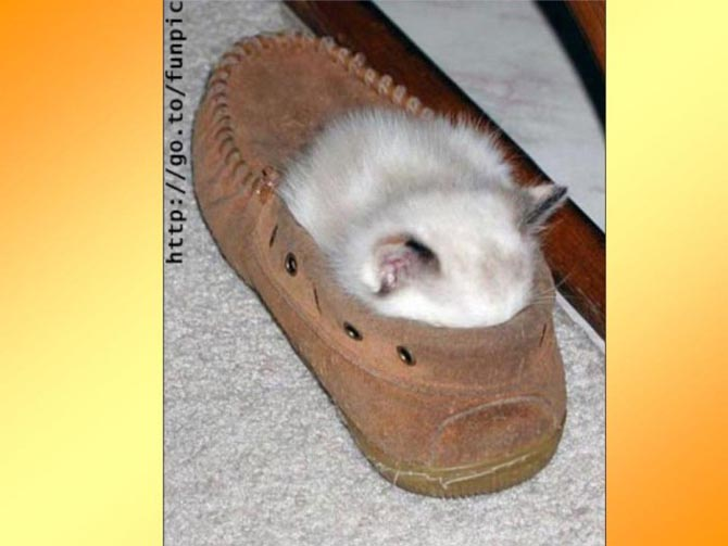 Как и где спят кошки (28 фото)