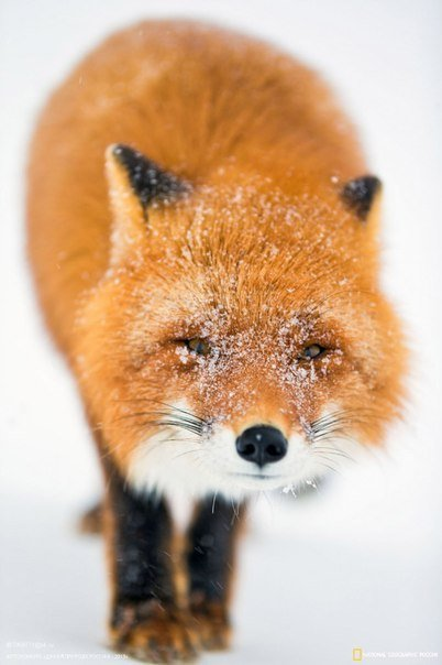 Животные милашки (15 фото)
