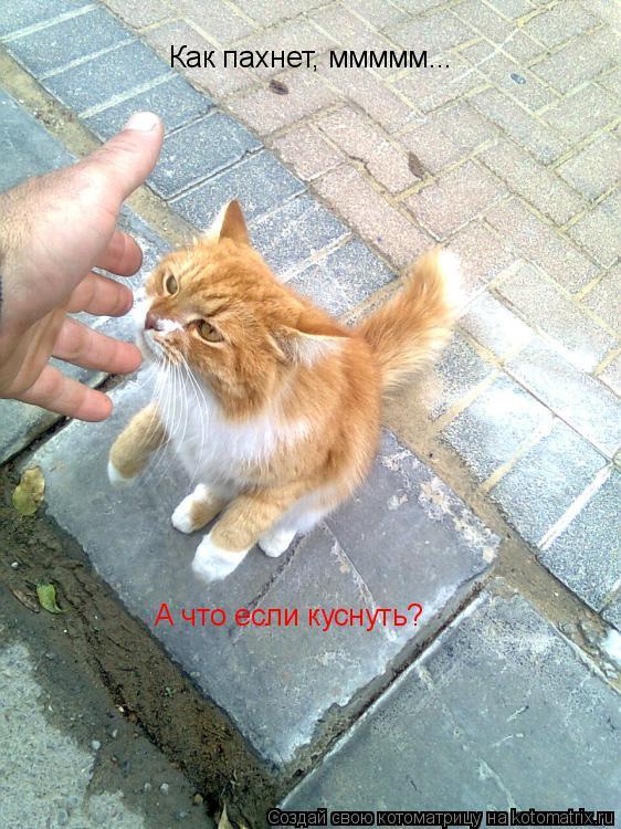 Животные прикалываются (15 фото)