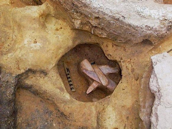 В Подмосковье раскопали мамонта с сюрпризом внутри