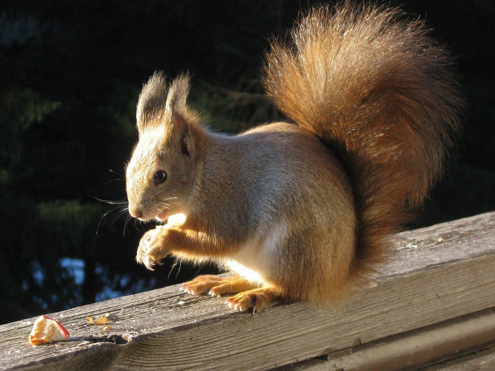 Каким образом белкам удаётся помнить то, где они зарыли свои орехи?