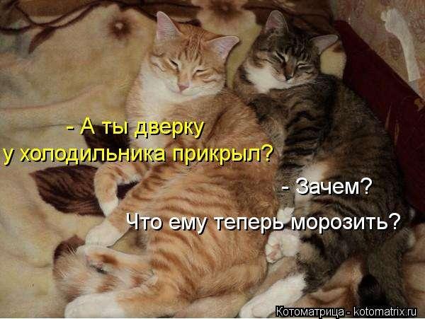 Приколы с животными (15 фото)