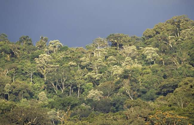 Скорость исчезновения бразильских лесов признали рекордной за десятилетие (3 фото)