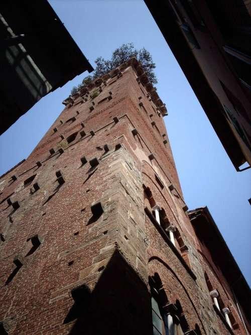 Торре Гуиниджи: башня, на вершине которой растут дубы (16 фото)