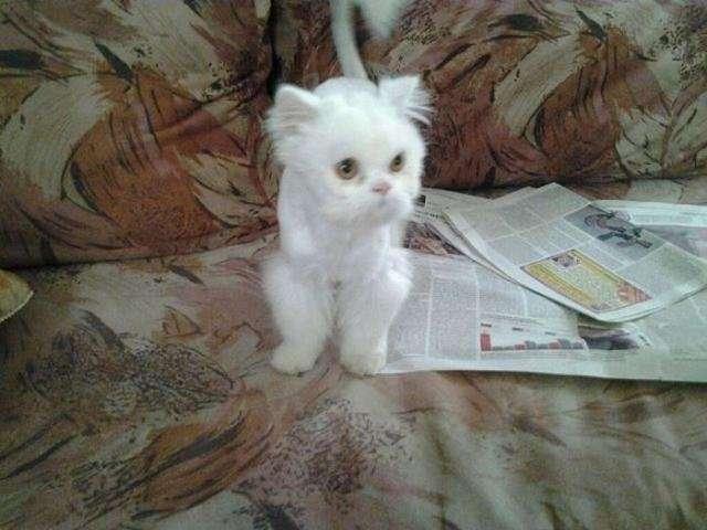 Вторая жизнь бездомного кота