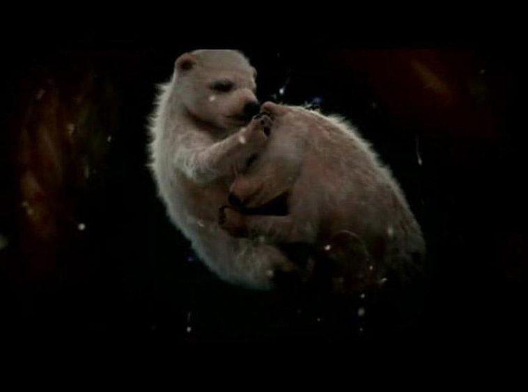 Как выглядят животные в утробе матери? Фото, которые потрясли весь мир
