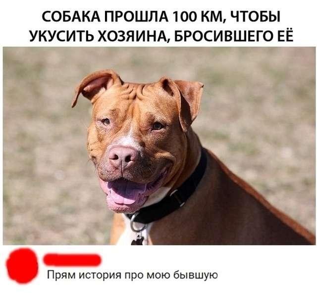 Юмор и шутки на тему: «Когда вам не рады» (24 фото)